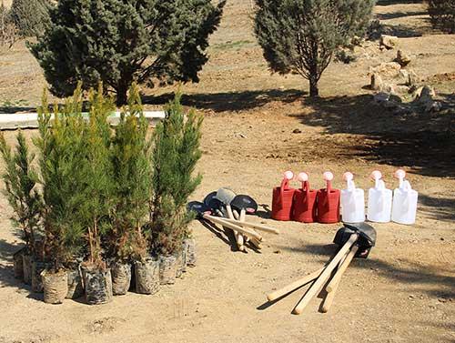 tree2-samgroup